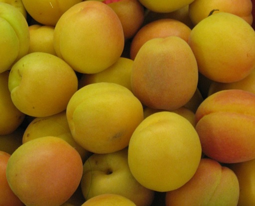cropped apricot image