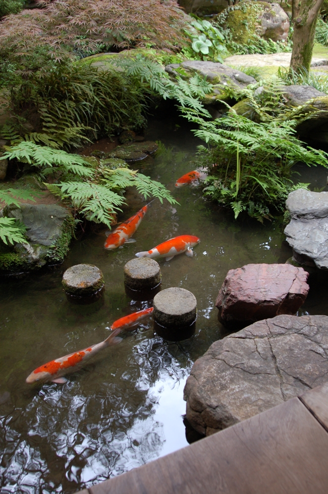Natural Garden Pond Maintenance : Matching the Correct Pond Fish to Your Pond Type  Pet Care Corner