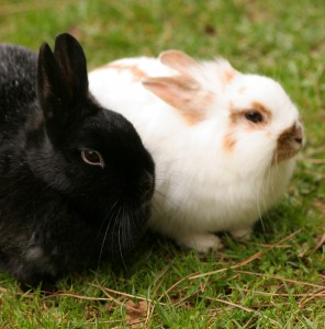 Rabbits Sitting In The Grass