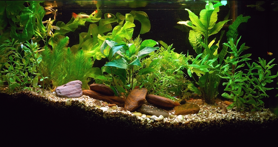 freshwater fish tank plant care setting up a fish tank with live plants aquarium care