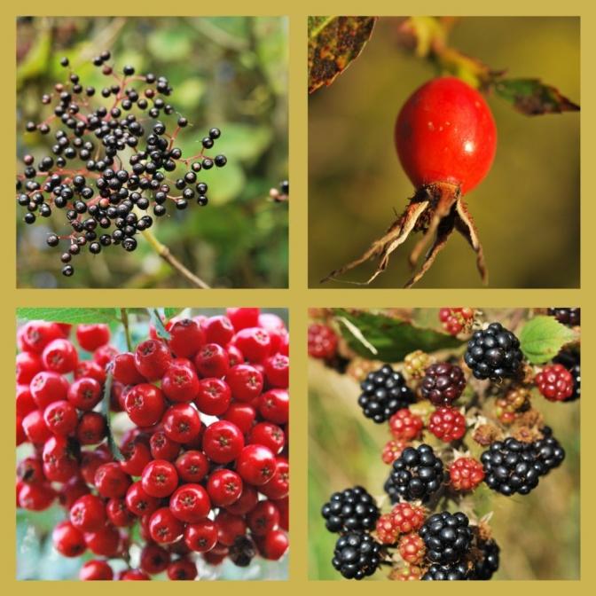 season of berries
