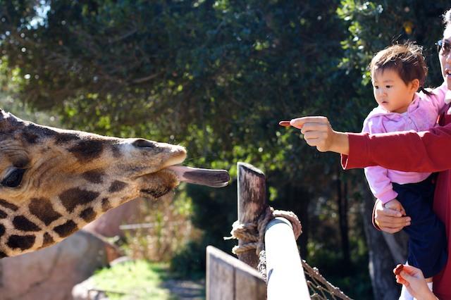 giraffe-11
