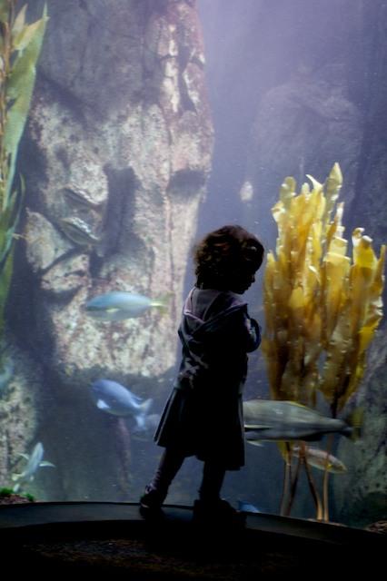 aquarium-4