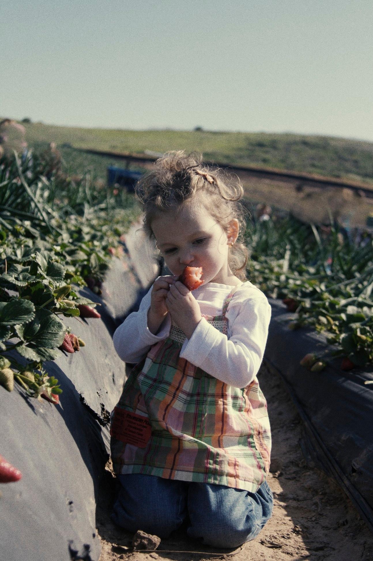 farm-361