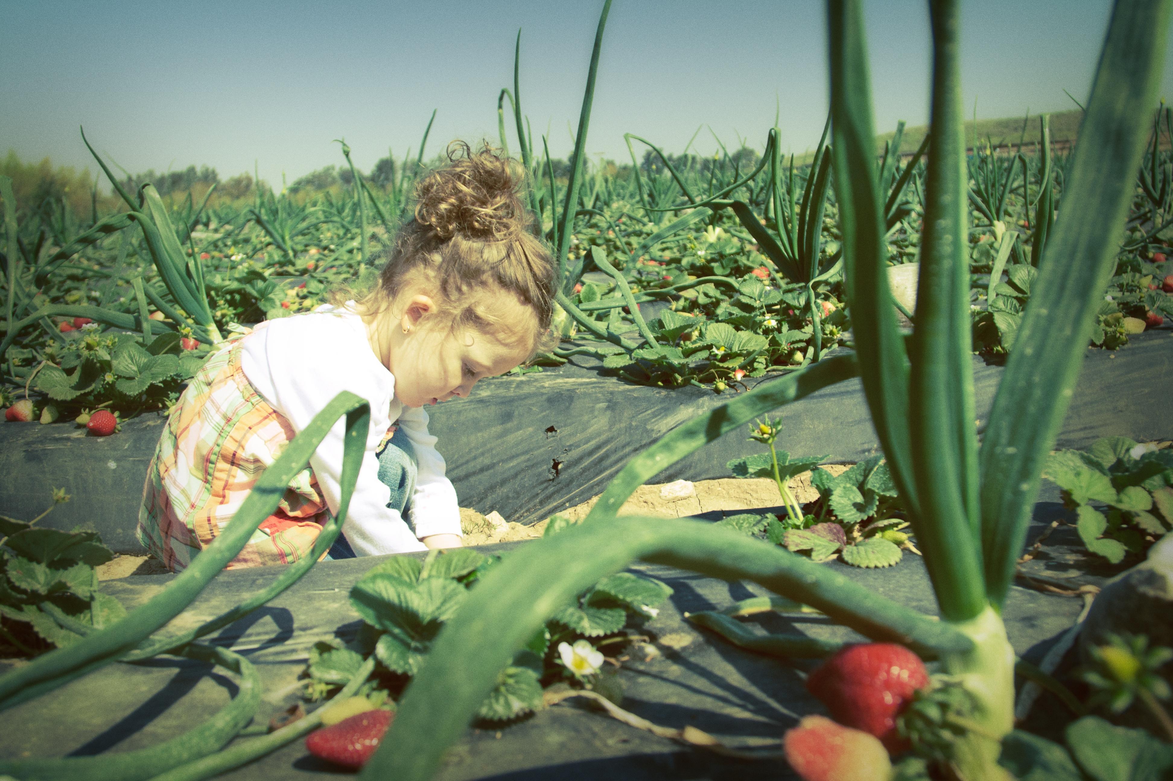 farm-365