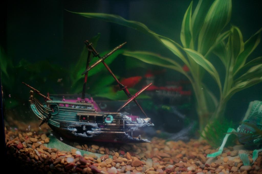 fish  1837