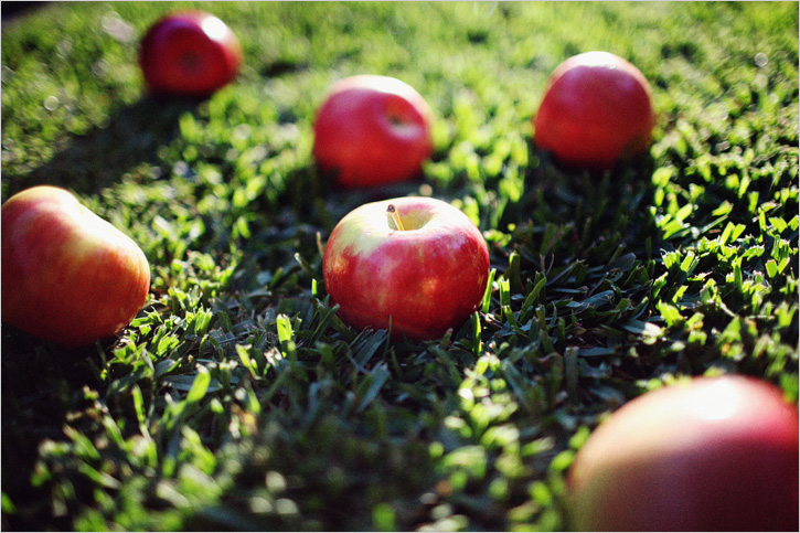 apples_01