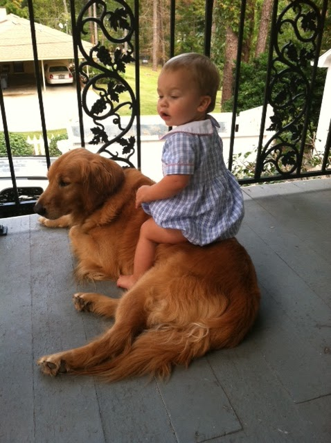 Abcs of brooke blueprint bliss marianne simon design dogs or cats dogs i have an 8 year old golden retriever malvernweather Images