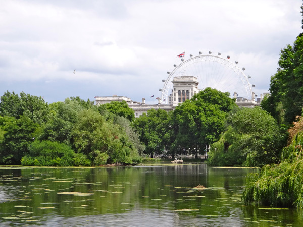 Beautiful View of the London Eye from St James Park