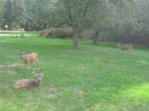 teh deer.