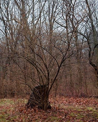 Cascades Stump and Tree