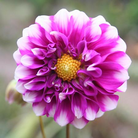 flower-09.jpg