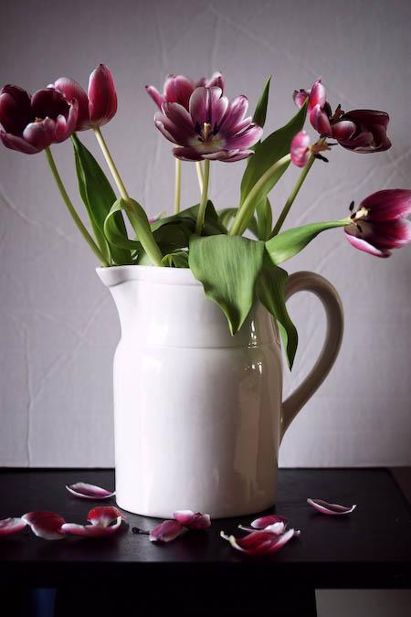 040308-tulips.jpg
