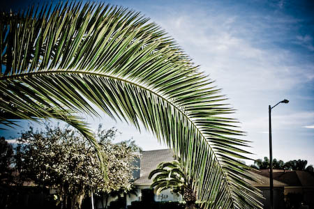 011909-frond