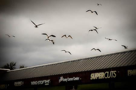 013109-seagulls