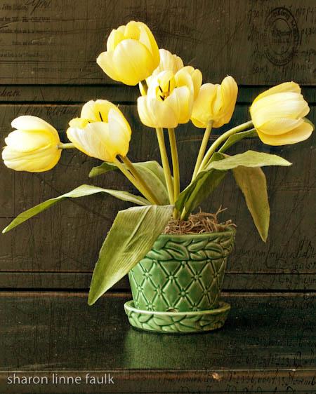 051009-yellowtulips