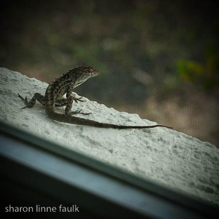 052409-lizard