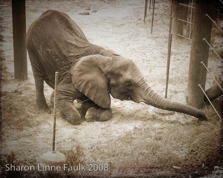 052909-elephant