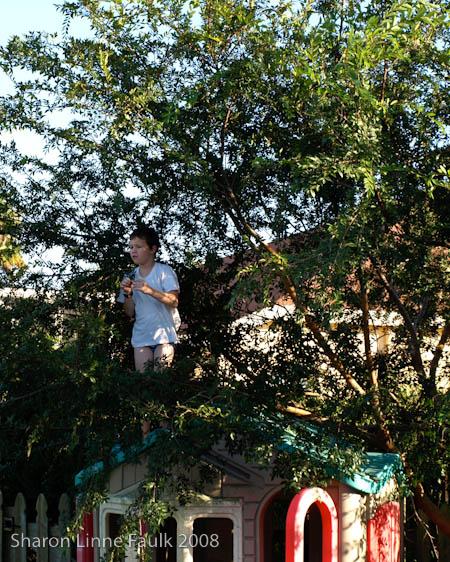 elm-tree-5