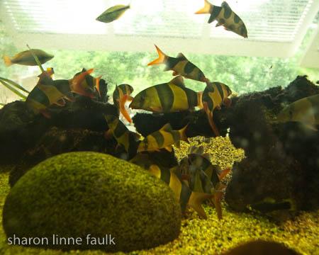072409 aquarium-4