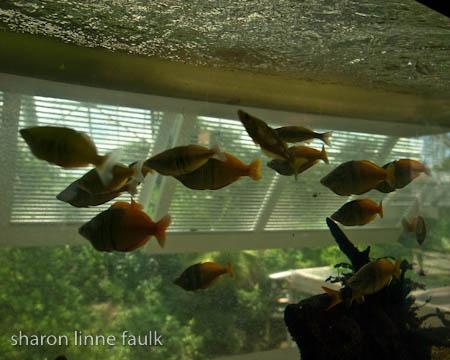 072409 aquarium-5