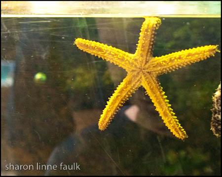 072409 aquarium-8