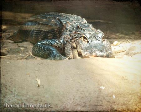 072409 aquarium