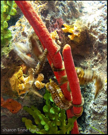 072509 aquarium-6