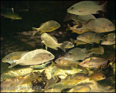 072509 aquarium
