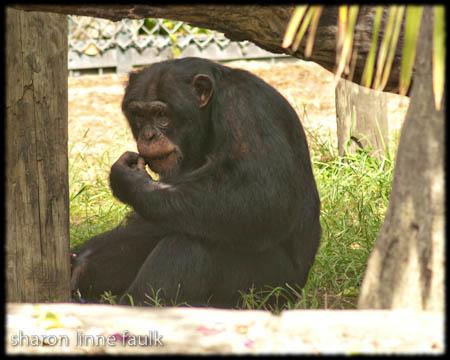 wpid2736-091109-zoo-2.jpg