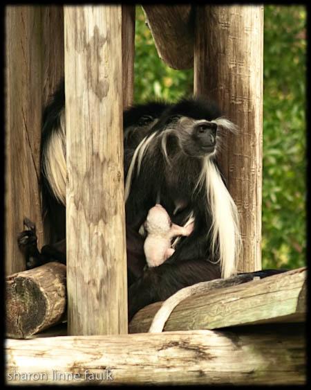 wpid2738-091109-zoo-3.jpg