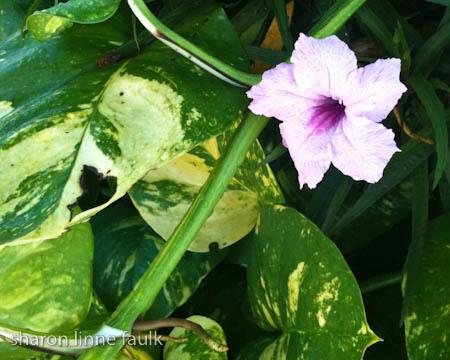 wpid2804-092109-flower.jpg
