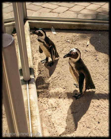 wpid2856-091909-zoo-14.jpg
