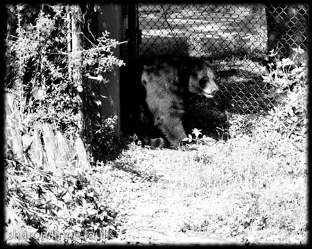 wpid2882-091909-zoo2-3.jpg