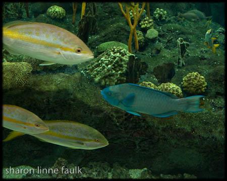 wpid3182-102709-aquarium.jpg