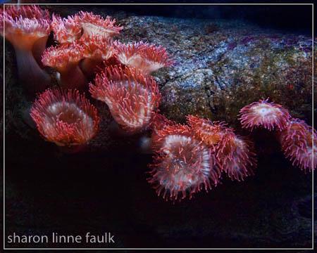 wpid3186-102709-aquarium-3.jpg