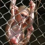 Funny_monkey-1