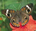 butterflyplace.JPG