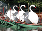 boston_swan_boats.jpg