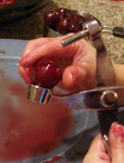 cherries1.JPG