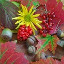 new-england-wildflower-society.jpg