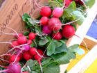 radish-pesto-wicked-tasty-harvest.jpg