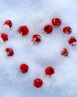 berry-snow-heart.jpg