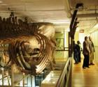harvard-museum-of-natural-history.jpg