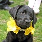 nantucket-daffodil-festival.jpg