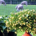 gore-place-plants-sheep.jpg