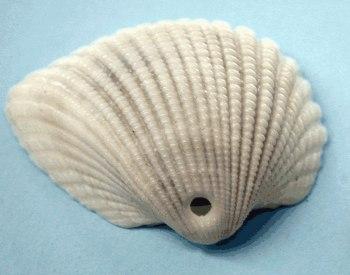 beach-3-shell.jpg