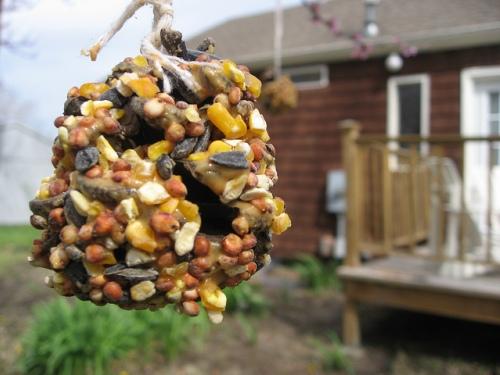 bird-feeder.jpg