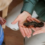 trustees-salamander.jpg