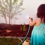 Vi-garden.jpg